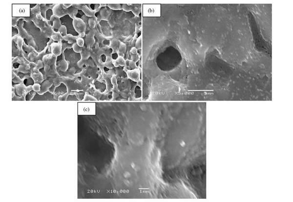 میکروگراف SEM با بزرگنمایی های مختلف میکروساختارهای پوشش فرا آبگریز یا سوپر هیدروفوبیک
