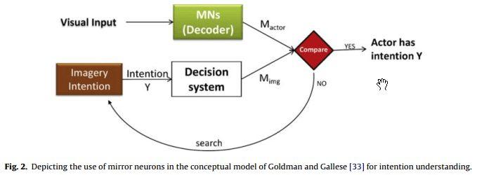 نمایش استفاده از نورون های آینهای در الگوی مفهومی گلدمن و گالیس [33] به منظور درک مقصود