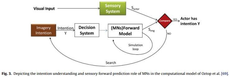 نمایش درک مقصود و پیشبینی حسی رو به جلو در رابطه با نقش MN ها در الگوی محاسباتی اوزتوپ و همکاران [69].