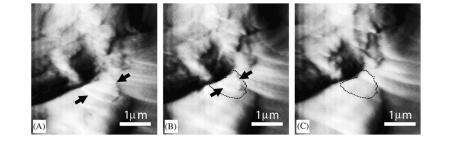 تصویربرداری های سریع AFM ( سیگنال خطا) از حل شدن یک کریستال