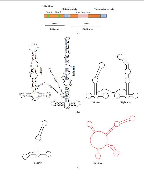 ساختار عناصر متحرک Alu و موشی