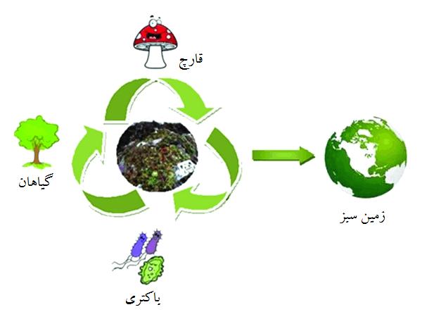 فرایند اصلاح زیستی ضایعات