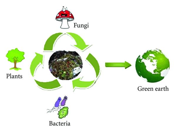 The process of waste bioremediation