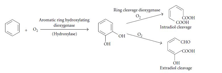 تجزیه ترکیبات معطر توسط دی مونواوکسیگنازها