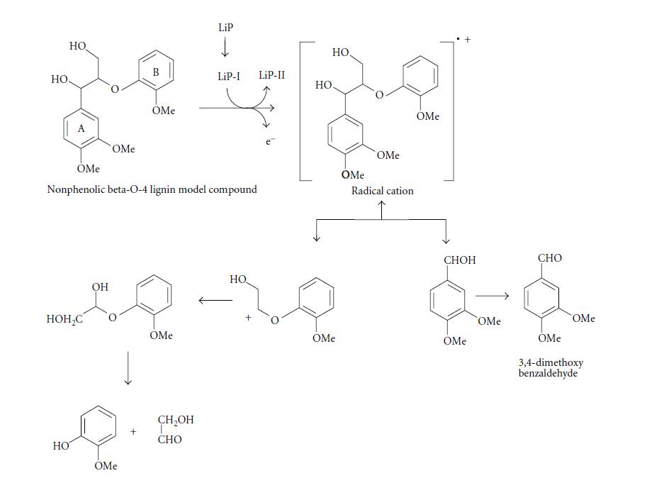 لیپوکسیدهای پلیمری Lip-اکسیداسیون کاتالیزی ترکیب مدل o-4-β