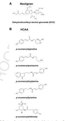 آمینو اسیدها – زندگی بین متابولیسم و سیگنالینگ