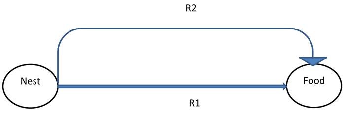 روش برای ACO دو پل با تغییر R1 و R2 مسیرهای طول