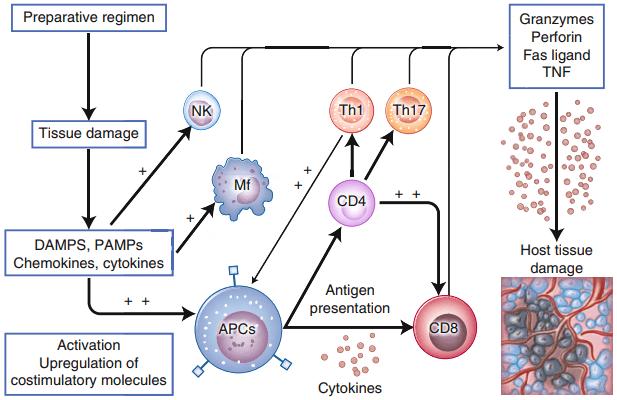 ایمونولوژیک پیوند سلول بنیادی آلوژنیک در مقابل میزبان و