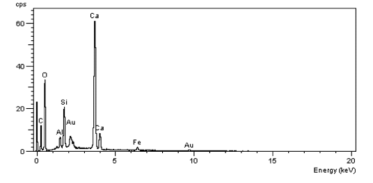EDAC فیبر نبات سبوس واکنشی با بزرگنمایی 500